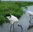 景点大全-黑龙江扎龙国家自然保护区
