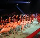 景点大全-长隆国际马戏大剧院