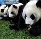 景点大全-佛坪熊猫谷自然保护区