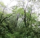 景点大全-凤县紫柏山森林公园