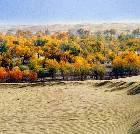 景点大全-金塔沙漠胡杨林