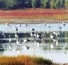 景点大全-盐城丹顶鹤湿地生态旅游区
