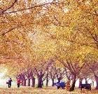 景点大全-泰兴国家古银杏公园
