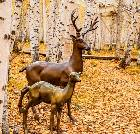 景点大全-额尔古纳白桦林