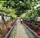 景点大全-渭南葡萄产业园