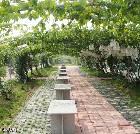 景点大全-平度大泽山葡萄大观园