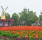 景点大全-苏州中国花卉植物园