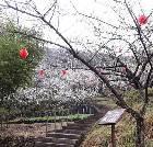 景点大全-绍兴香雪梅海旅游区