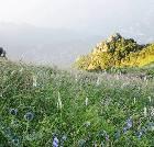 景点大全-北京白草畔自然风景区
