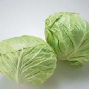 圆白菜(陆地)