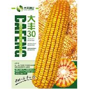 大丰30玉米