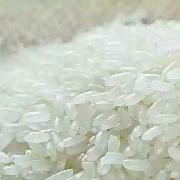 稻花香二号大米