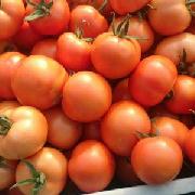 齐达利西红柿