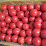 金鹏西红柿