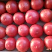 果粉西红柿