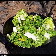黄心菜白菜
