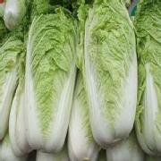 青雜三號白菜