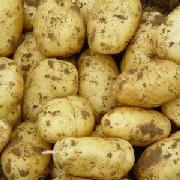 麗薯六號土豆
