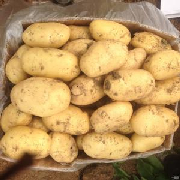 荷蘭十五土豆