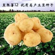 冀張薯12號