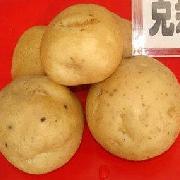 克新一号土豆