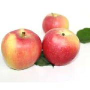 高原紅蘋果