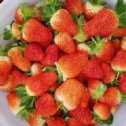 美国甜查理草莓