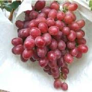 紅無核葡萄