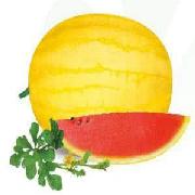 黃美人西瓜